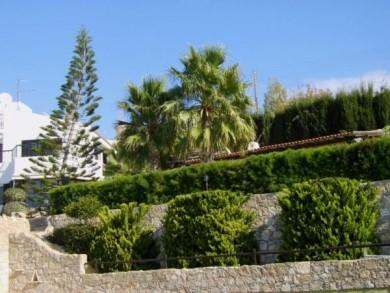 Дом - Кипр - Южное побережье - Пафос, основное фото