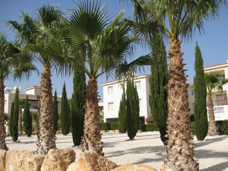 Квартира - Кипр - Южное побережье - Хлорака, основное фото